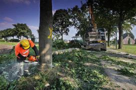 170 bomen gekapt bij geheime bliksemoperatie