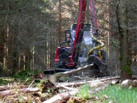Duurzaam bosbeheer kan tien miljoen nieuwe banen opleveren